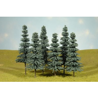 3 4 BLUE SPRUCE TREES (9)